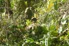 UK re-starts long-range jungle recce course